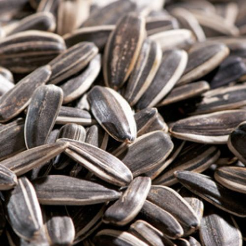 sunflower seed-